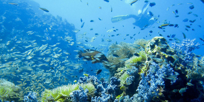 Top 3 Dives in the World – Don't Miss Them