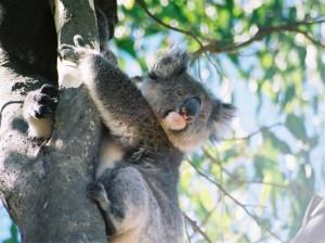 Graybit Around the World RTW -Travel family vacation fun stuff to do - australia 3