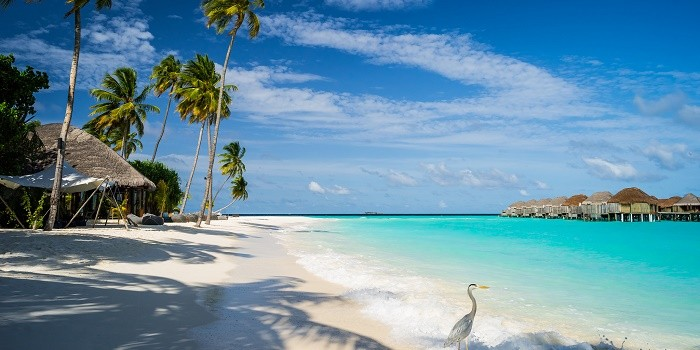 Travel Guide to Maldives – An Exotic Vacation Destination