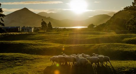 10 Amazing Facts about New Zealand