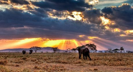Safari in Serengeti National Park – Everything You Need To Know