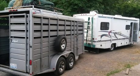 The Best Way Of Transporting Has Been Re-Evolved With The Aid Of Horse Trailers