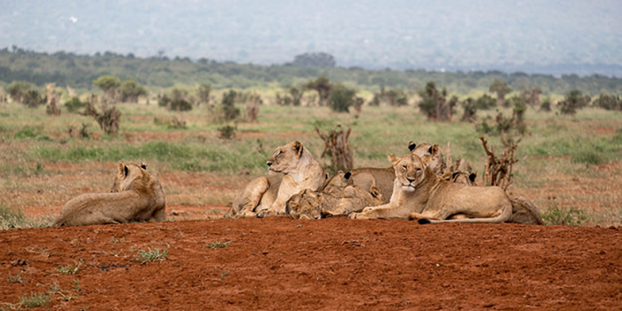 Important Tips For A Safari Travel