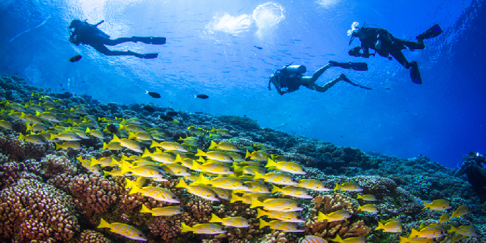 Unravelling the underwater secrets when diving in Cyprus